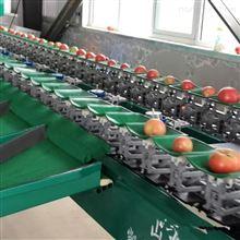 XGJ-SZ新鲜黄心油桃选果机 脆蜜黄桃分大小的机器