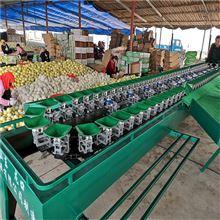 XGJ-SZ贝贝南瓜分选机果蔬挑大小的设备选果机