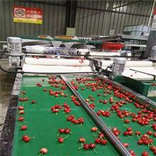 6GFJC-75山东樱桃直径分选设备五莲水果选果机