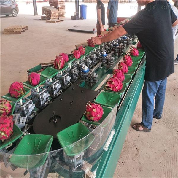 火龙果分选设备 水果选果机分果机 分级机