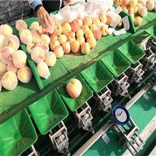 XGJ-SZ青州蜜桃桃子选果机 自动分选设备分大小