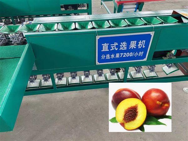 烟台苹果分级机  重量分选大小等级