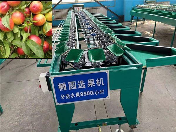 云南苹果选果机水果分果机分级机