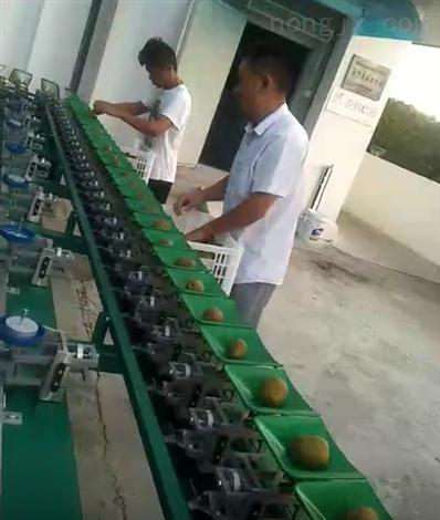 猕猴桃分拣机  陕西周至产后处理设备