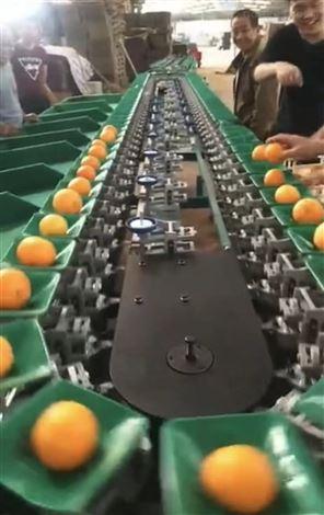 海南芒果分选机器 够可以水果分果机分级机