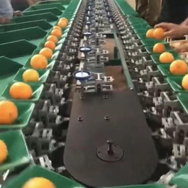 福橙选果机  海南澄迈自动分拣机价格