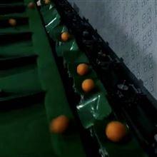 XGJ-Z红美人选果的机器   象山柑橘分级机
