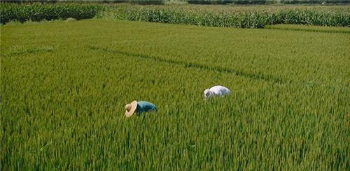 积极谋划 统筹推进 努力开创农业外资工作新局面