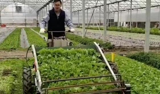上海世达尔:带有自动仿形功能的叶菜收割机研制完成