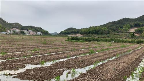直补到户!西藏出台耕地地力保护补贴政策实施方案