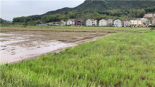 湖南省关于衡山恒鑫农业装备制造有限公司违反农机购置补贴政策处理情况的通报