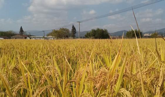 2021中国农业展望大会在京召开