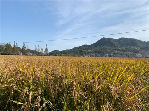 国家粮食安全与可持续发展对话研讨会在京召开