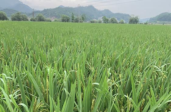 農業農村部關于印發《全國高標準農田建設規劃(2021-2030年)》的通知