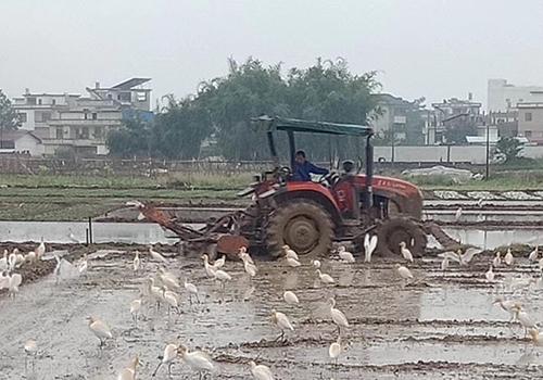 全面整治变型拖拉机、拒绝违法载人,黑龙江开展龙8安全专项整治行动