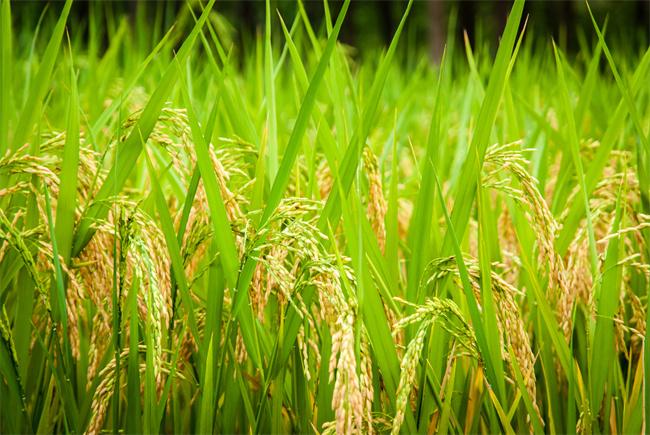 农业农村部与北京市签署合作协议